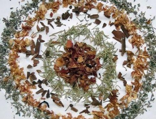 ATIVANDO O CURADOR INTERNO através da mandala viva do reino vegetal